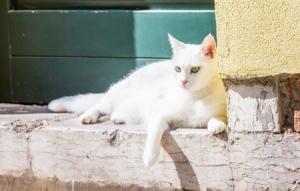 Witte kat in de zon
