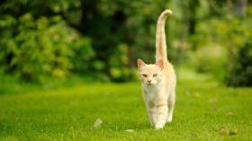 foto-vervolgpagina-contact-kat-staart-hoog