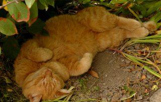 rode kat rust in de schaduw