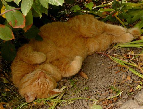 Ook een kat kan het te warm hebben!