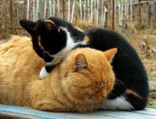 Rouwende kat; nieuw maatje?