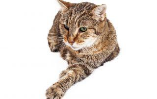 de oudere kat: een slag apart